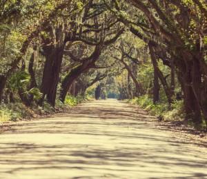 Long chemin perdu au milieu d'une forêt
