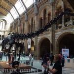 Dinosaure musée d'histoire naturelle Londres