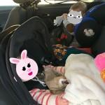 siège auto evo-lunafix et phoenix pro 2 kiddy
