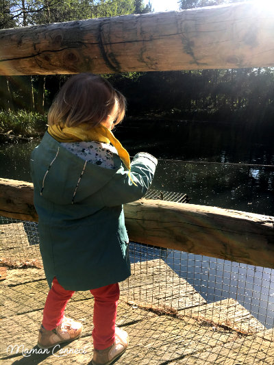 Louloutte face aux oiseaux
