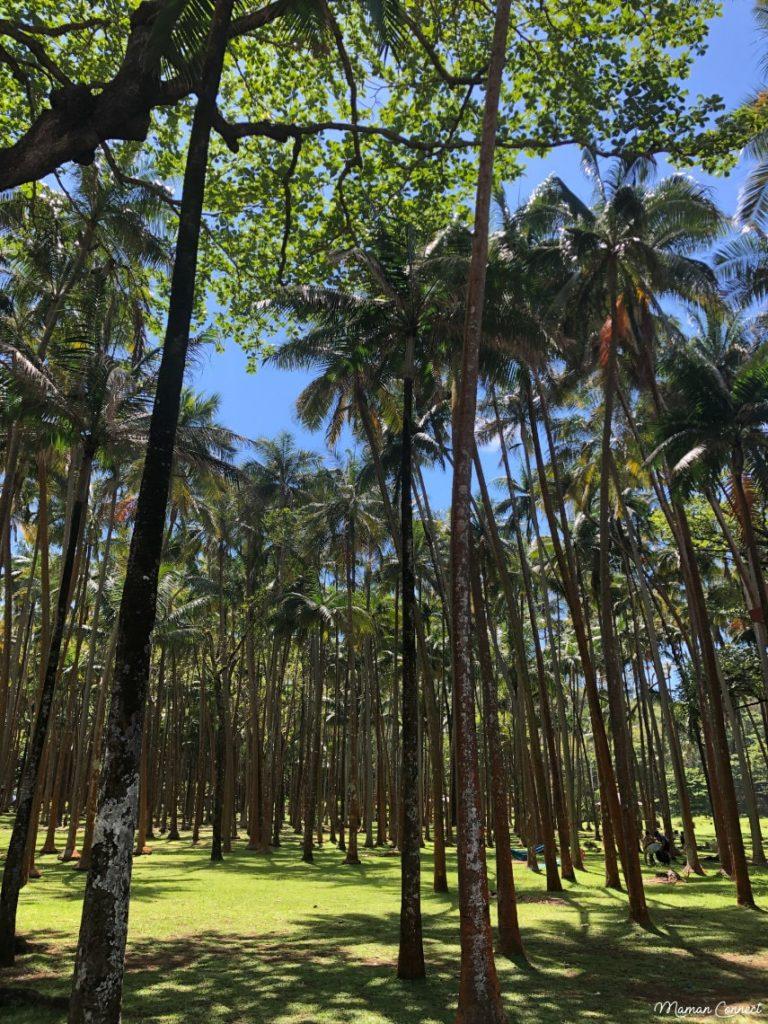 Cocoterai Anse des cascades