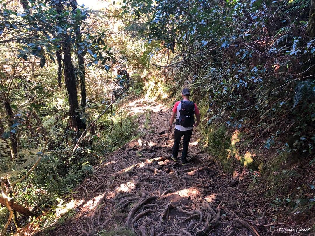 Racines forêt Belouve